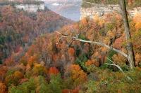 Cumberland Plateau-prd_016644-Nature Conservancy