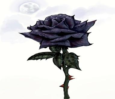 Halfeti Rose